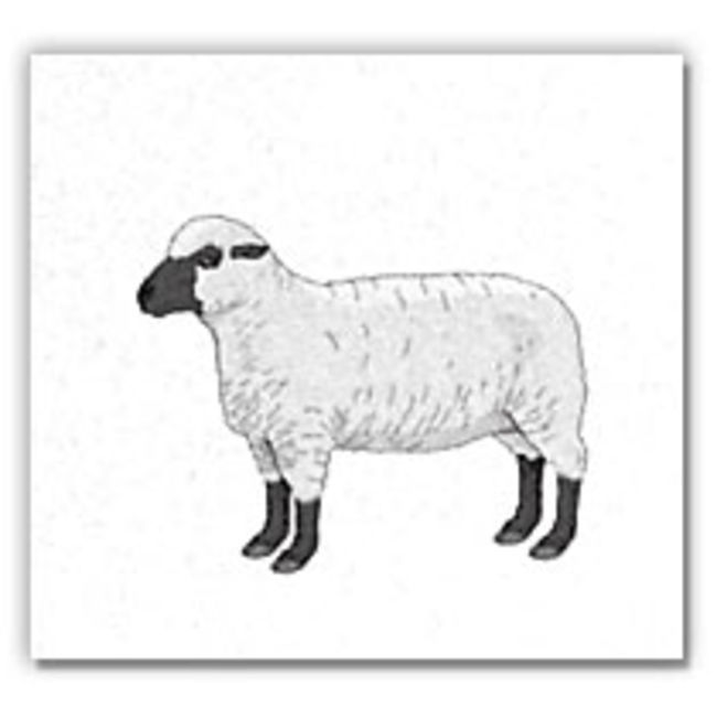 Gift Cards-Sheep Design