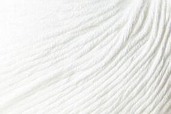 Light 100% Egyptian Cotton Yarn:  color 0212