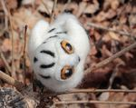 Snowy Owl Single Creature Needle Felting Kit - Romney Ridge (image C)